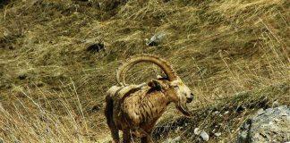 Сырдарья-Туркестанский природный парк