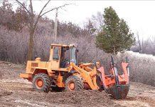 Пересадка деревьев в дендропарке