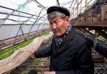 Предприниматель создает коллекционный ореховый сад