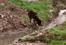 Микрорайон Ынтымак утонул в мусоре