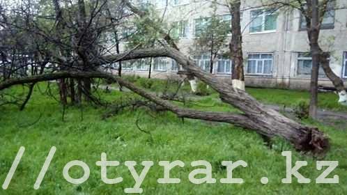 Шквальный ветер повалил деревья в Шымкенте