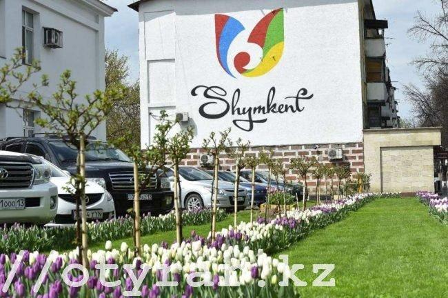 320 тысяч тюльпанов расцвело в Шымкенте