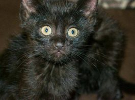 Внедорожные котята в Шымкенте