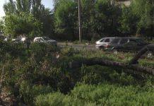 Спиленные деревья в Шымкенте