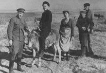 Чимкент в годы войны