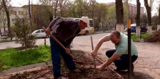 """Профсоюзы Шымкента предлагают присодиниться к акции """"Цветущий город"""""""