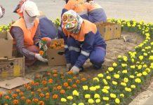В Шымкенте начались работы по высадке летних цветов