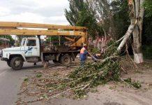 Сильный ветер поломал деревья