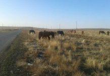 Штрафстоянка для скота