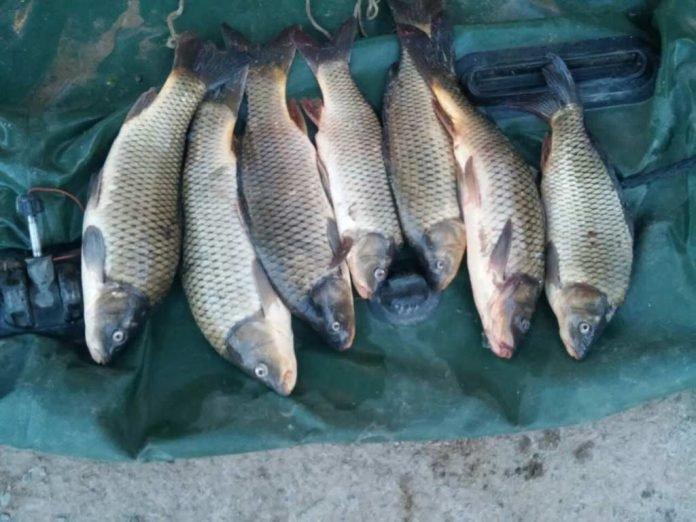 Рыба в ОПМ