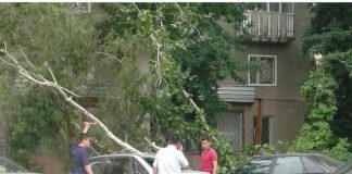 Ветер в Шымкенте сломал деревья, снес крыши, повредил автомобили