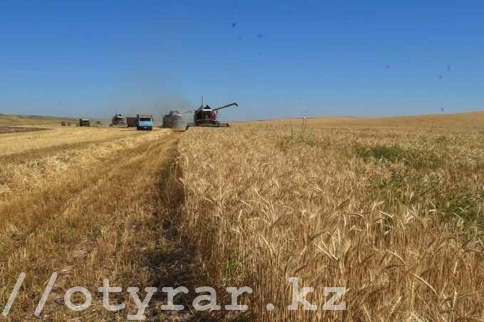 Южно-Казахстанская область первой в республике начала уборку урожая