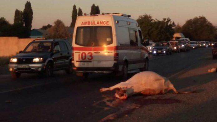 Молодой водитель легковой автомашины Mercedes насмерть сбил трёх коров