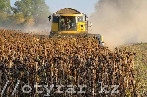 Южный Казахстан увеличил экспорт масличных культур в семь раз.