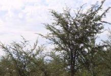 Территория зеленого пояса Шымкента увеличилась вдвое
