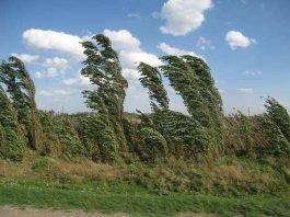 Ветер в ЮКО