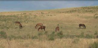 Кража лошадей