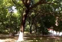 """Деревья в парке """"Кен-баба"""" будут обрезать только после согласования с экологами"""