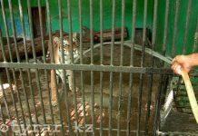 Как переносят жару животные в шымкентском зоопарке