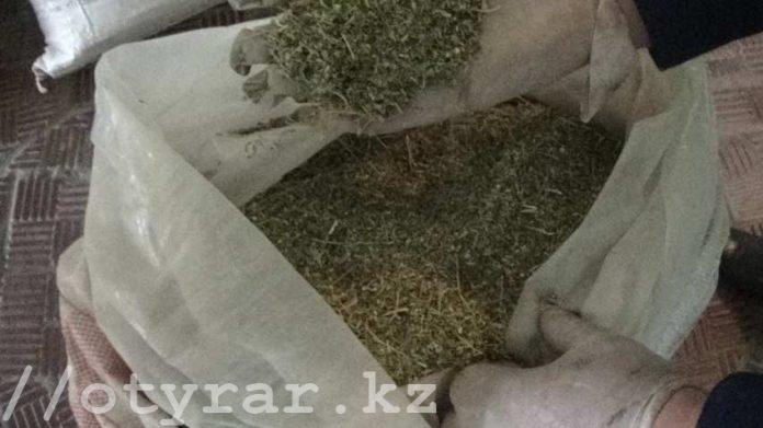 Полицейские изъяли у жителей ЮКО крупную партию марихуаны