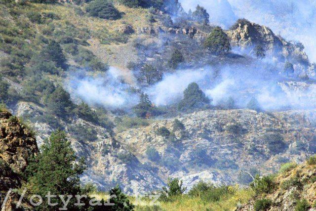 Пожар в природном парке