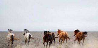 Табун лошадей