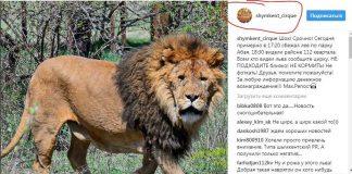 В Шымкенте лев сбежал из цирка