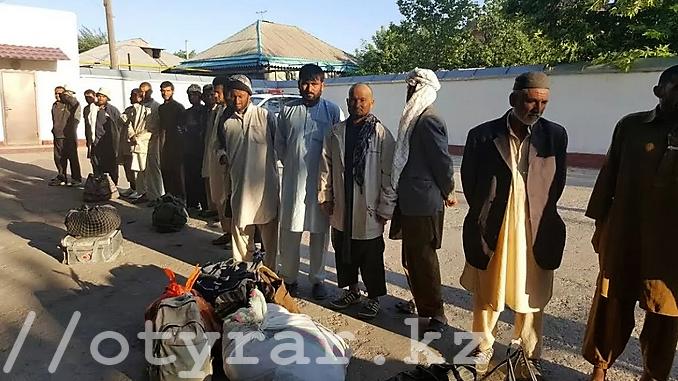 Граждане Афганистана собирали ферулу вонючую