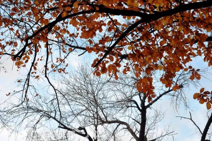 Осень в Шымкенте