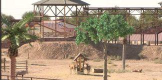 Зона Африки шымкентского зоопарка