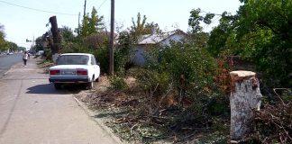 В Шымкенте за выходные грубейшим образом обрезали ветви многолетних деревьев