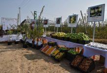 Сорта яблок, которые выращивают в Сарыагашском районе