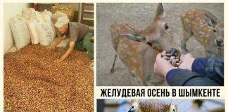 Итоги желудевой осени для зоопарка