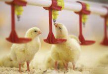Новую птицефабрику строят в ЮКО