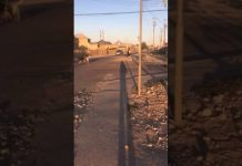 Кайтпас-1 терроризируют бродячие собаки