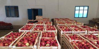 Яблоки, собранные в Тюлькубасском районе