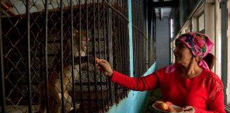 Зоопарк Шымкента купил обезьян
