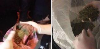2,5 кг марихуаны обнаружили у жителя Шымкента