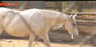 Лошадь Тохтара Тулешова