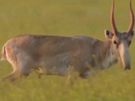 В ЮКО растет число преступлений против диких животных