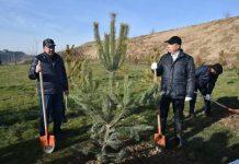 Акимы сажали деревья