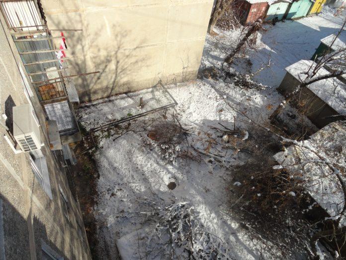 Вырубка деревьев по-шымкентски