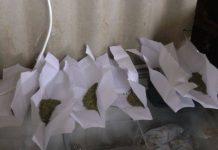 Изъятая марихуана