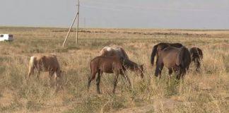 Лошади пасутся на вольном выгоне
