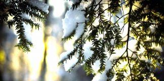 Солнечная зима