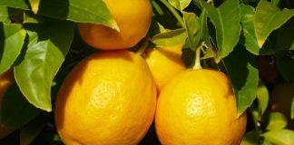 лимонный бизнес
