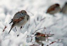 Понижение температуры. Зима. Птицы