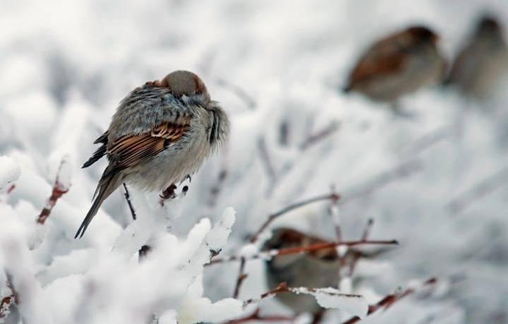 Сегодня внекоторых областях Казахстана пройдет снег