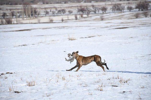 В ЮКО возрождают охотничье искусство