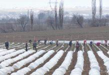 Сельхозработы в ЮКО